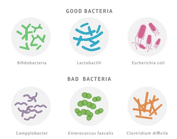 Melkesyrebakterier er det beste for magen din!